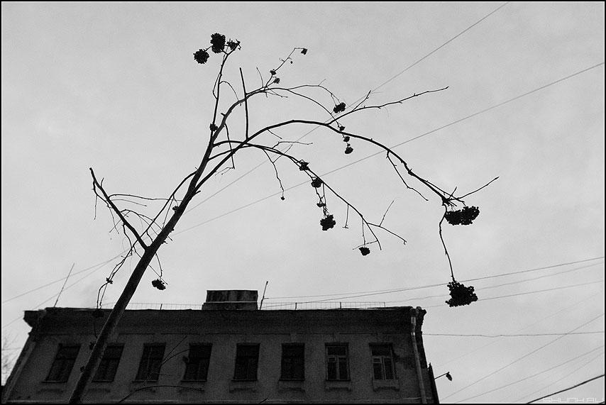 * * * - рябина монохромное дом провода небо фото фотосайт