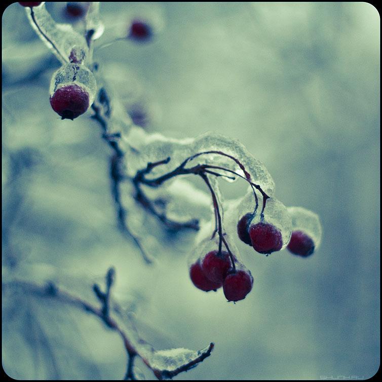 Ягодное местечко - ягодки веточки хрустальное обработка квадратное фото фотосайт