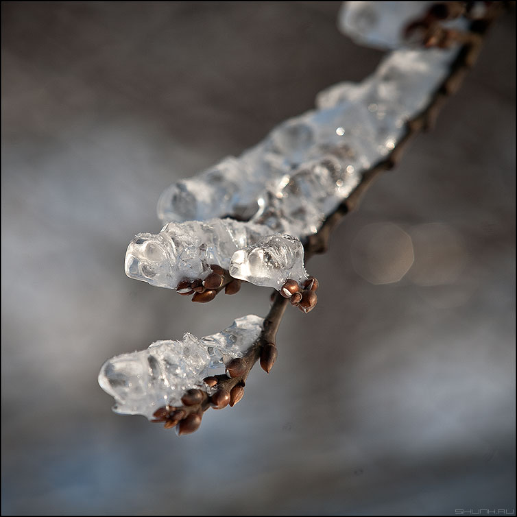 Хрустализация - хрусталь зима лед веточка наледь зима квадратное кралатское фото фотосайт