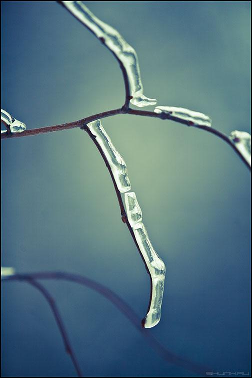 Ломаный хрусталь - веточки обработка зима ледяное хрустальное ветвь наморозь красненькое ломкое фото фотосайт