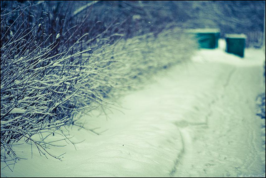 Ёршики - кусты снег зеленые тоннель контейнеры фото фотосайт