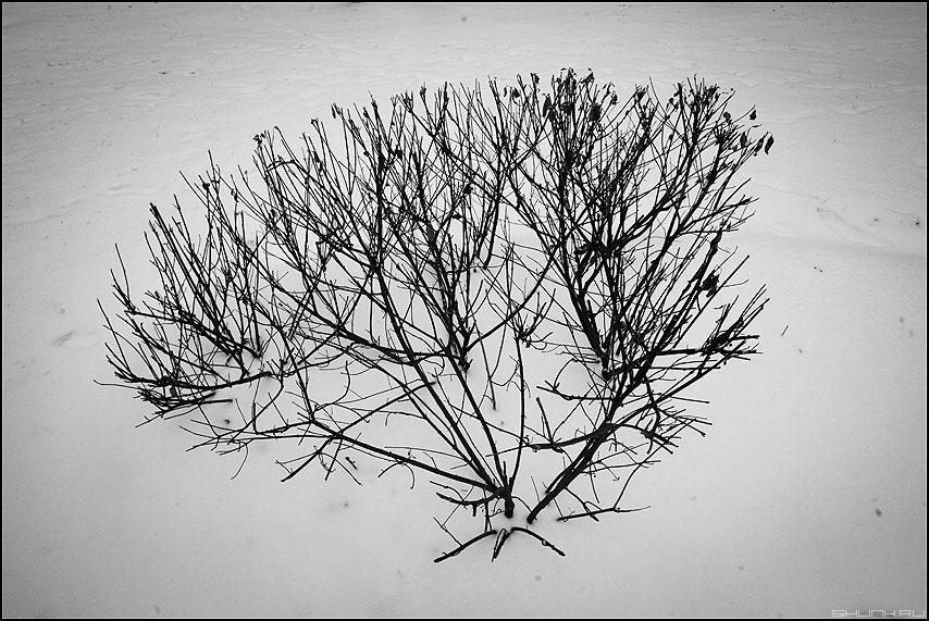 Куст - зима куст монохромное чернобелое фото фотосайт