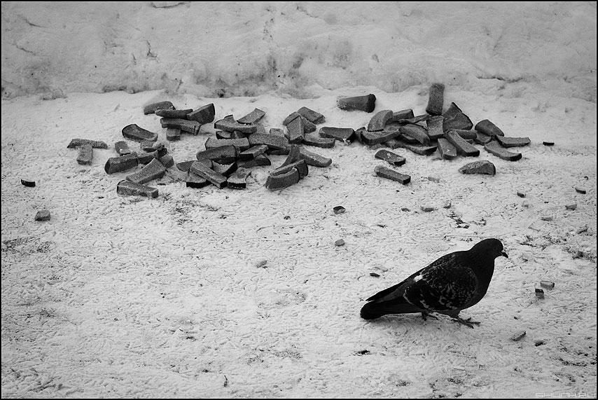 Корки - корки снег голубь монохромное фото фотосайт