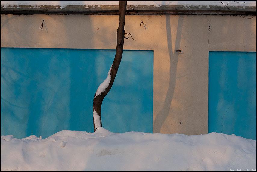 Дерево-девушка - дерево стена снег этюд парковое девушка фото фотосайт