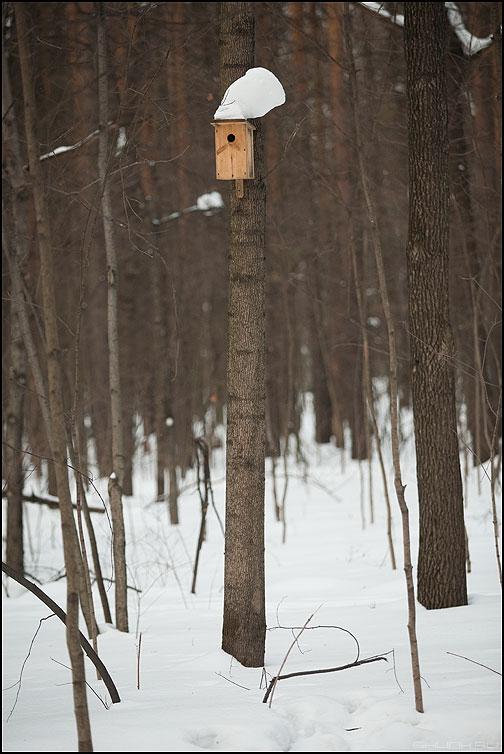 Элвис жив! - элвис скворешник лес снег шапка фото фотосайт