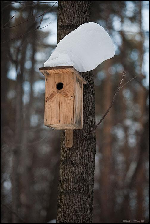 Элвис жив! - элвис скворешник лес снег шапка скворечник фото фотосайт