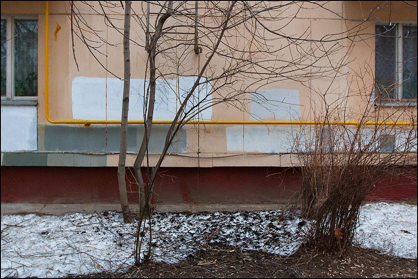 Кусты - куты весна пятиэтажка хрущевка окна балкон фото фотосайт