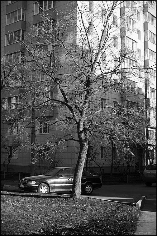 Дерево и мерседес - мерседес дерево дом монохромное фото фотосайт