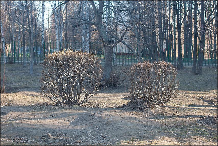 Весенние кусты - весна кусты свет уличное фото фотосайт