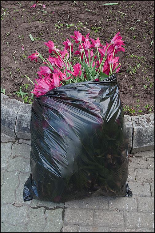 Букет любимой - букет тюльпаны элементы фото фотосайт