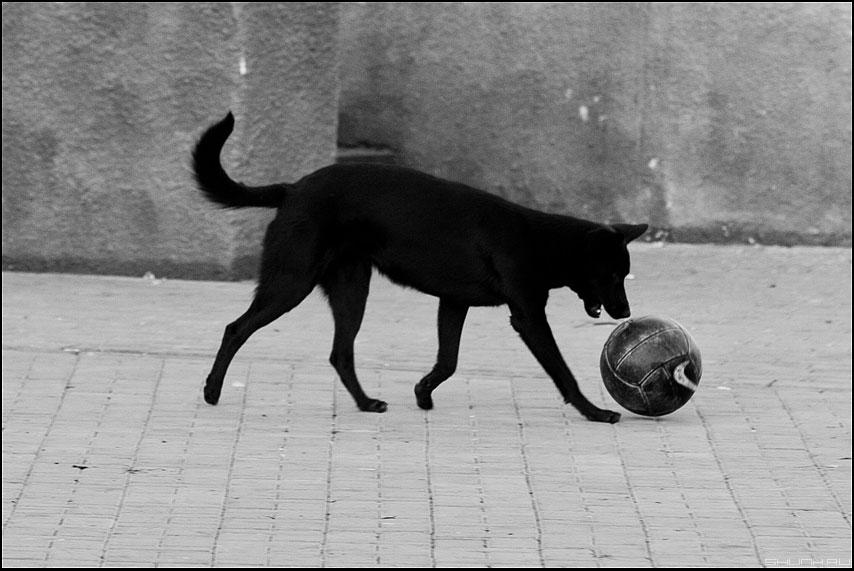 Трудно найти черную кошку в темной комнате если там собака - собака черная мячь графиное монохром фото фотосайт