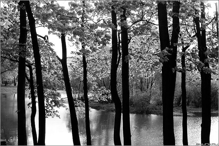 Столбики - деревья пруд фото фотосайт