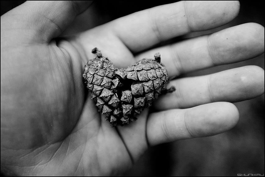 Любовь - это две половинки одного - шишка любовь рука пальцы сердце монохром ЧБ фото фотосайт