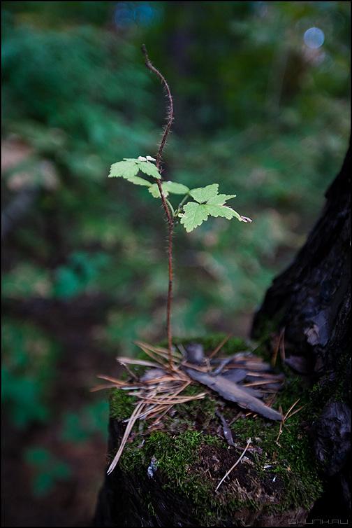 Росток - росток лес осеннее фото фотосайт