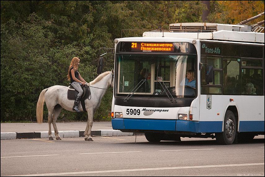 Лошадь Пролежаевского - лошадь троллейбус курьез остановка хумор фото фотосайт