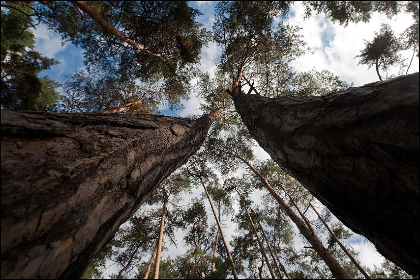 Ногами к небу - небо сосны ветви ноги природа фото фотосайт