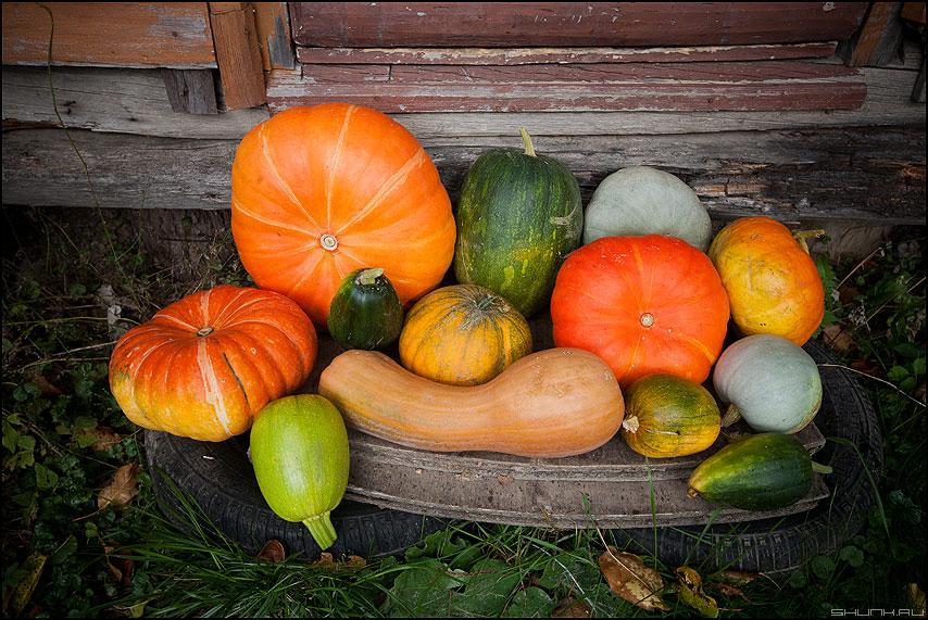 Урожай 2011 - дыня тыква натюрморт урожай 2011 кабачки тыквы фото фотосайт