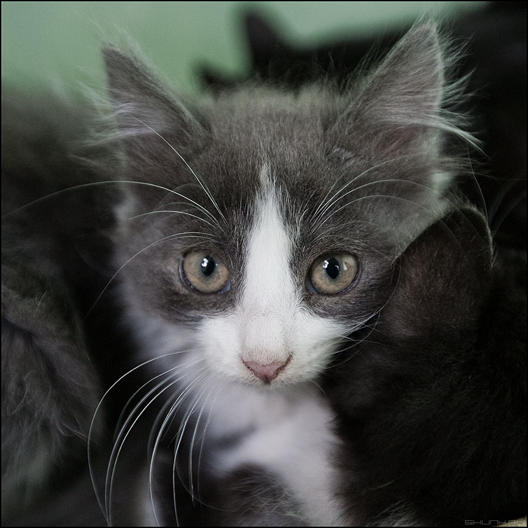 ВЗГЛЯД - котенок девервня квадратное живность фото фотосайт