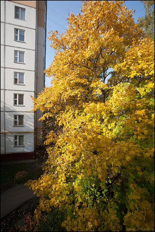 Осень во дворе - осень дом клен желтое дворовое фото фотосайт
