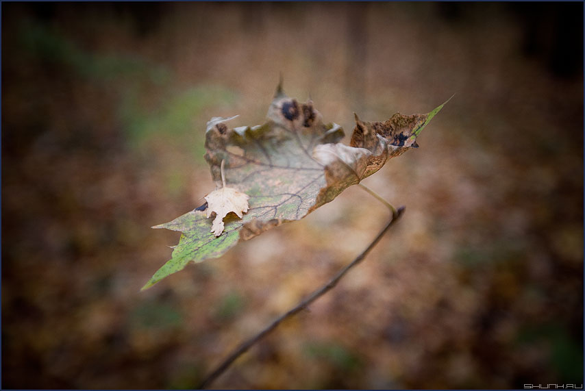 Листик - осень осеннее листик квадратное настроение 2011 фото фотосайт