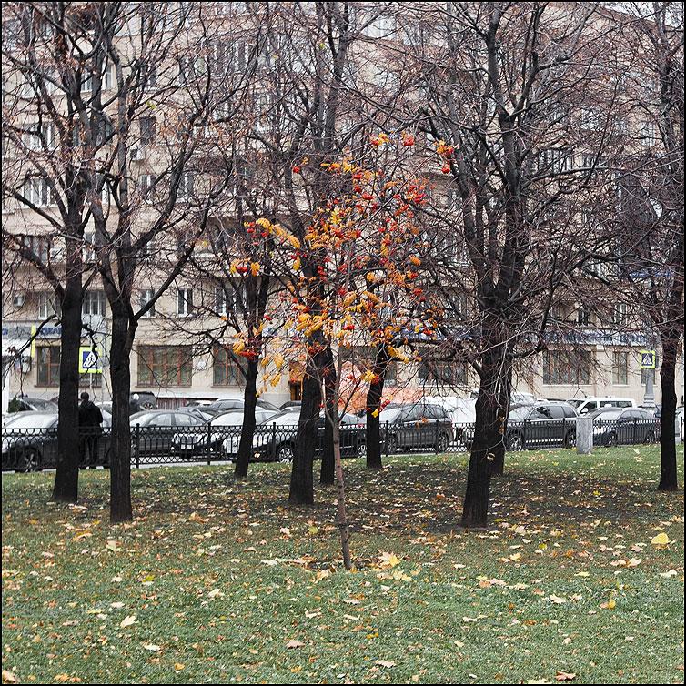 Осень в городе - осень рябина опала листва квадратное одиночество одна фото фотосайт