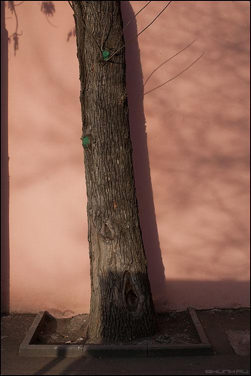 Про веточки - веточки стена уличное цвет розовый фото фотосайт