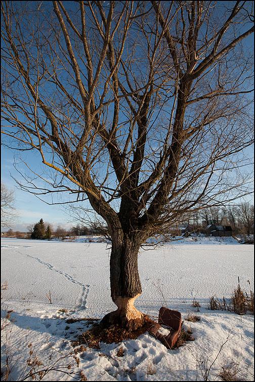 ...села, поела, опять пошла! - зима деревня дерево бобры пруд снег стул фото фотосайт
