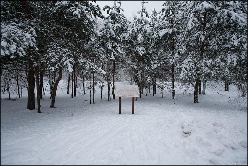 Добро пожаловать в зиму - зима бор серебряный сосны елки фото фотосайт