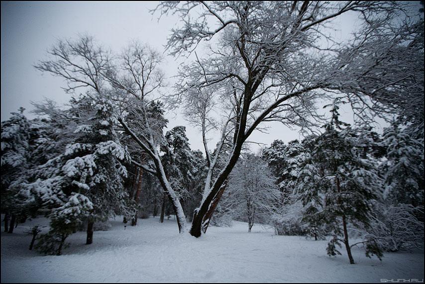 СерБор - серебряный бор деревья снег зима фото фотосайт