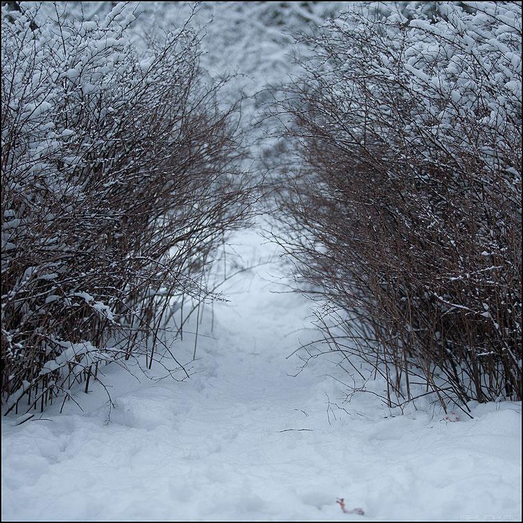 Лазеечка - кусты зима квадратное снег кустики проход фото фотосайт