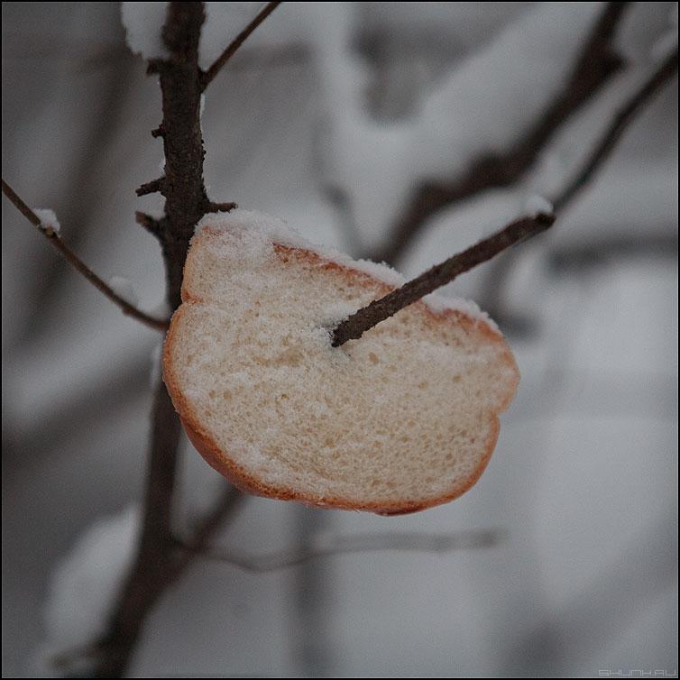 Белый мякишь сизым голубям... - хлеб зима квадратное веточка фото фотосайт