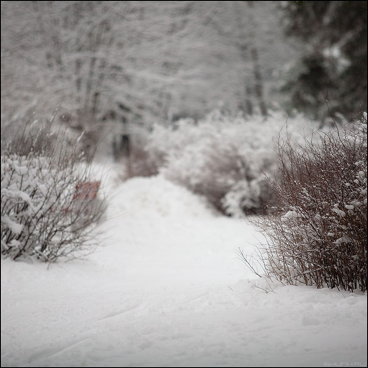 * * * - кусты зима квадратное снег кустики фото фотосайт