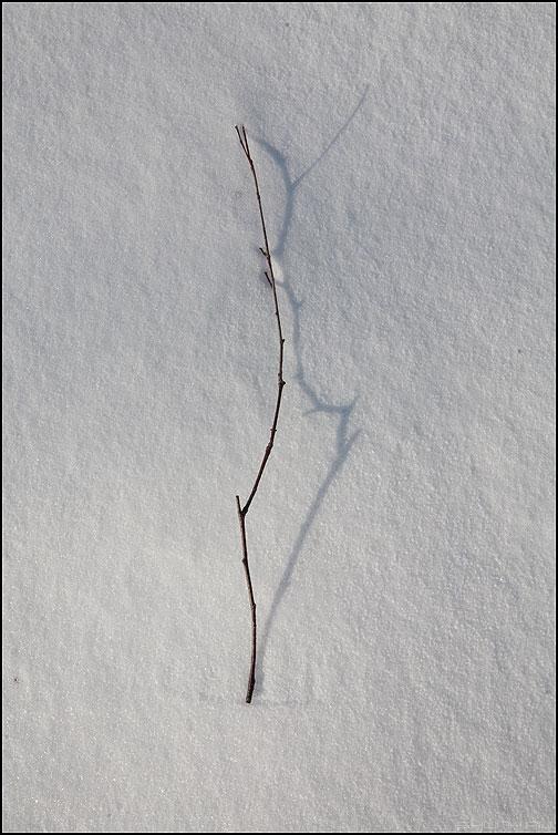 Веточка - веточка ветка снег зима фото фотосайт