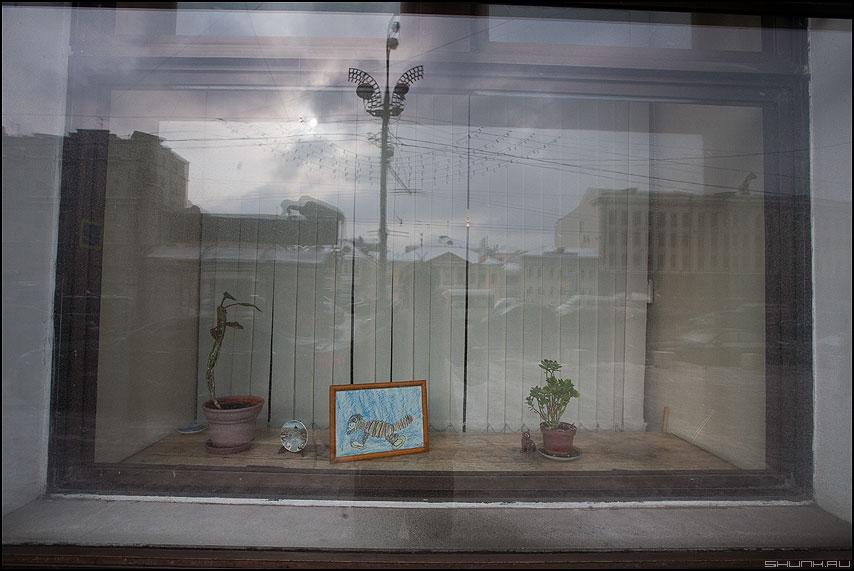 * * * - отражение витрина стекло элементы фото фотосайт