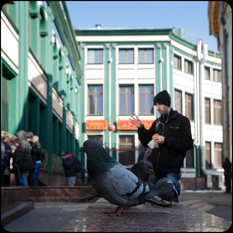 Повелитель голубей - парень голуби мд обед уличное квадратное фото фотосайт