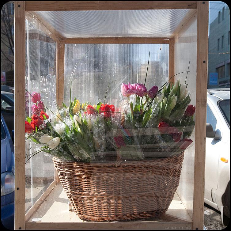 ...в кубе - 8марта цветы уличное продавец тюльпаны праздник квадратное фото фотосайт