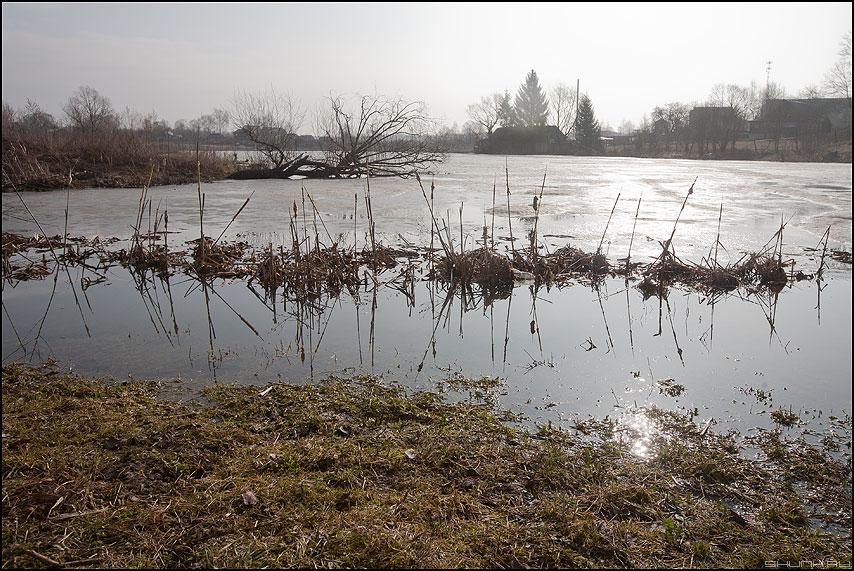 Талые воды - пруд камыш вода разлив весна деревня фото фотосайт