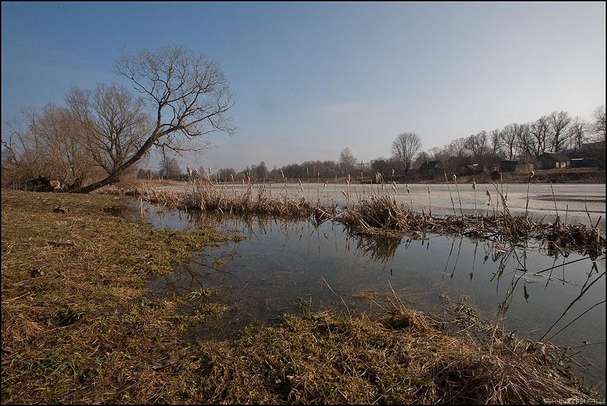 Бобриные угодья - весна деревня разлив дерево небо камыш рогоз фото фотосайт