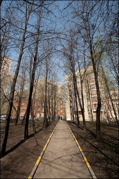 Тропинка городская - весна город тропа деревья фото фотосайт