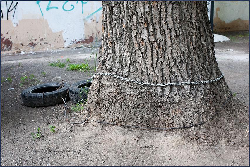 Златая цепь на дубе том... - цепь дерево двор уличное шины покрышки фото фотосайт