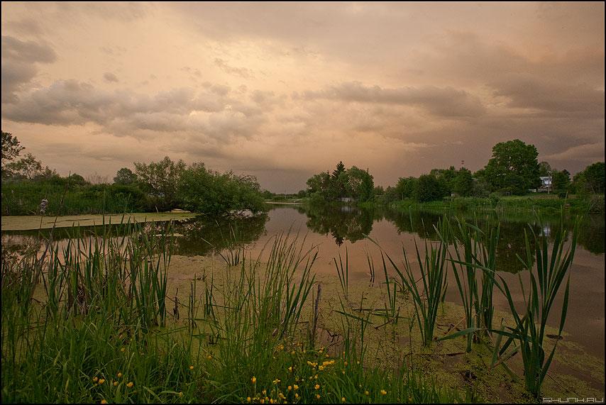 Рогоз - рогоз деревня лето шустиково фото фотосайт