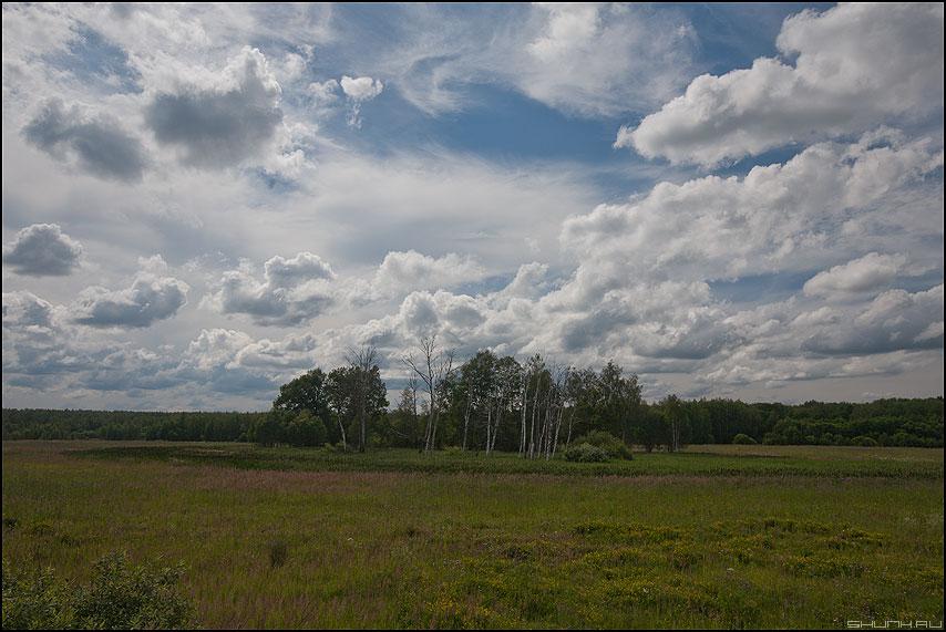 Остров невезения - деревня поле небо островок березы травка муравка фото фотосайт