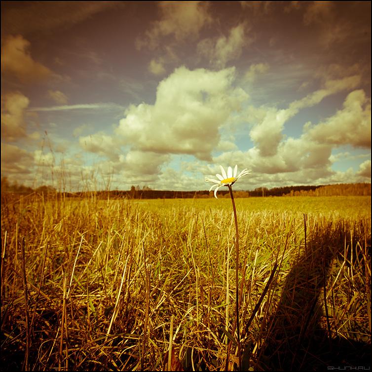 Раз ромашка - небо поле убрано осень октябрь ромашка фото фотосайт