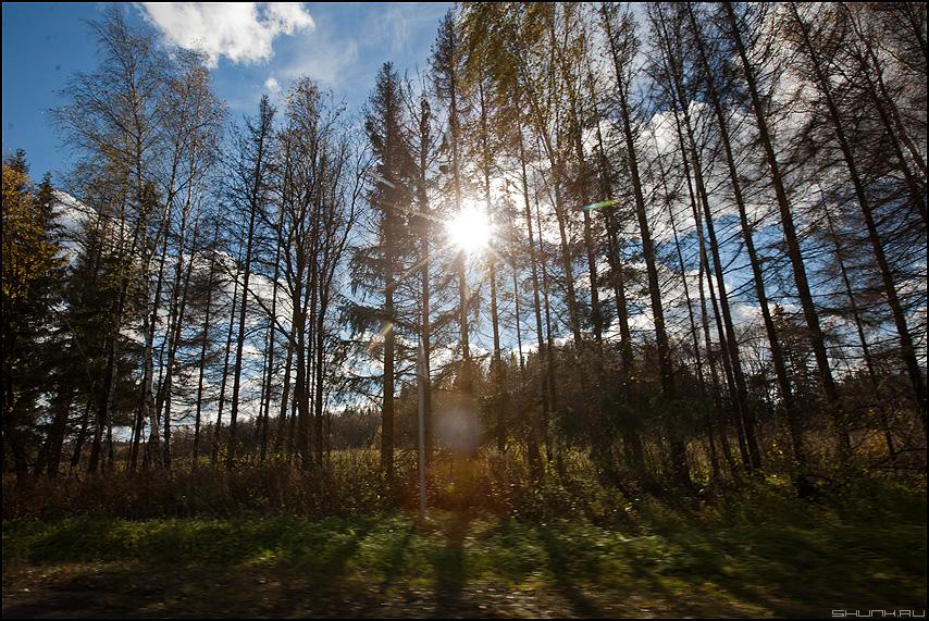 Солнышко через елочки - солнце елочки ветки деревня небо фото фотосайт