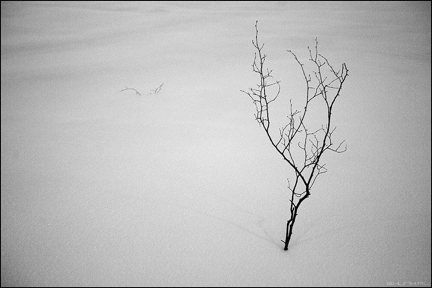 Ветка - зима снег чёрнобелое центр веточка фото фотосайт