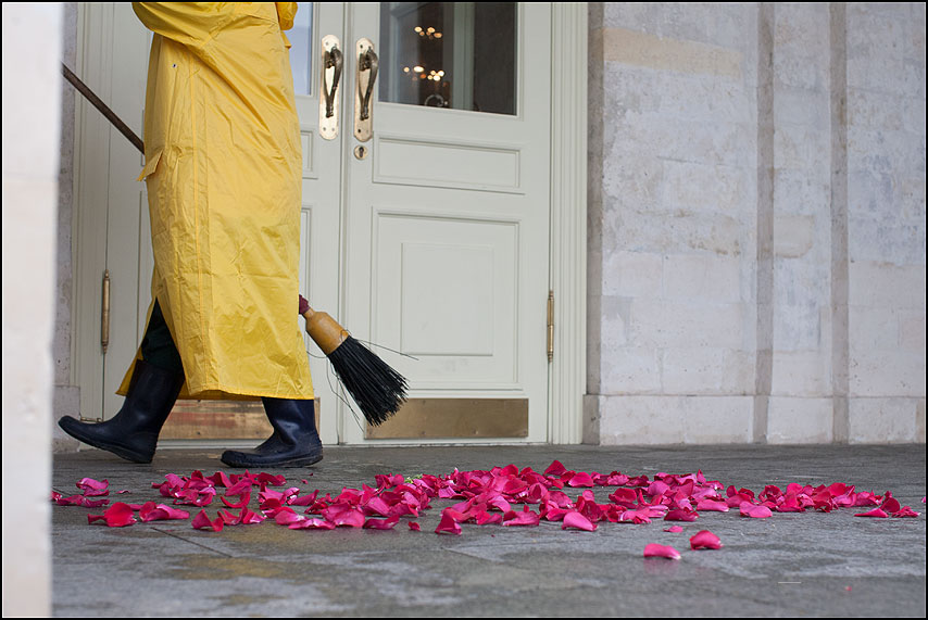 Немного о лепестках - лепестки метла дворник розовое желтое палитра фото фотосайт