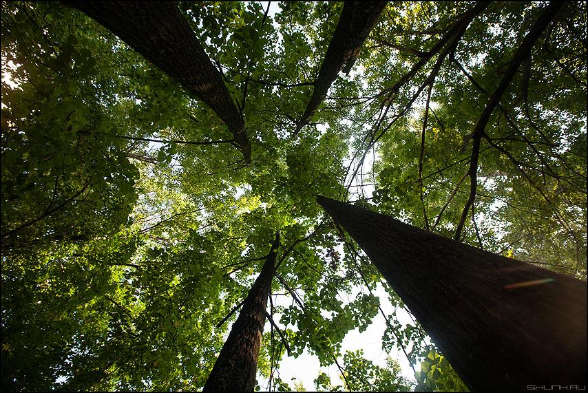 Четыре (настроение) - настроение лето деревья четыре стволы фото фотосайт