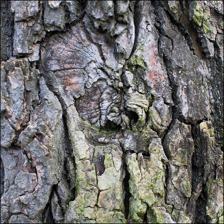 Кора - кора дерево квадрат осень фото фотосайт