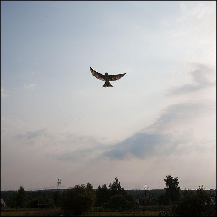 Птичку жалко - птица лето небо калистово фото фотосайт