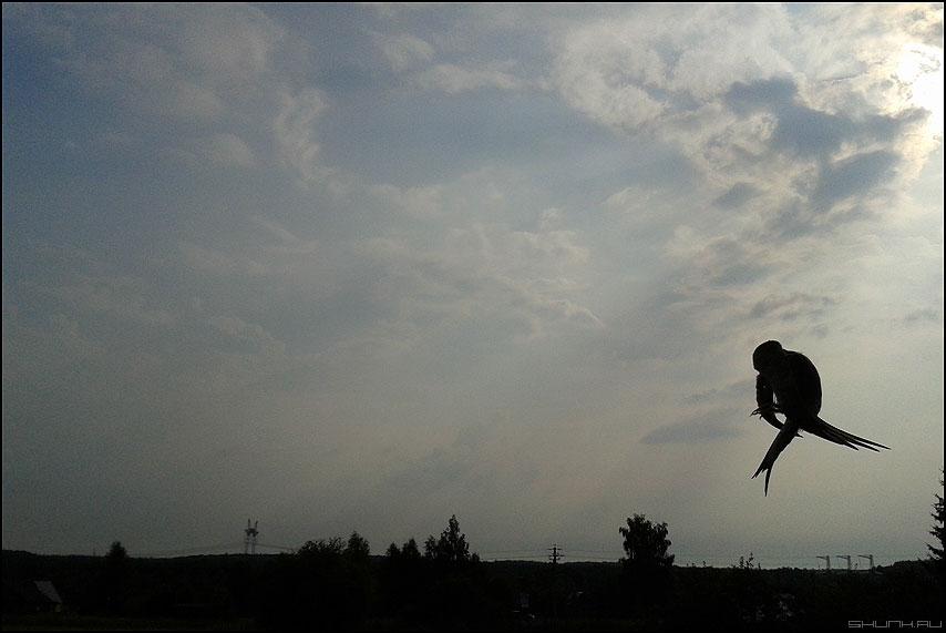 Элемент высшего пилотажа - птица лето небо калистово вариант самсунг мобила фото фотосайт